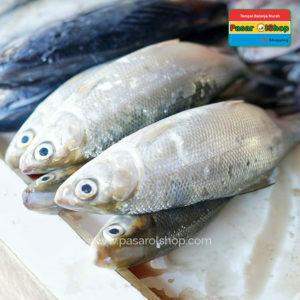 ikan bandeng segar agro buah pasarolshop 1-buah sayur online jogja