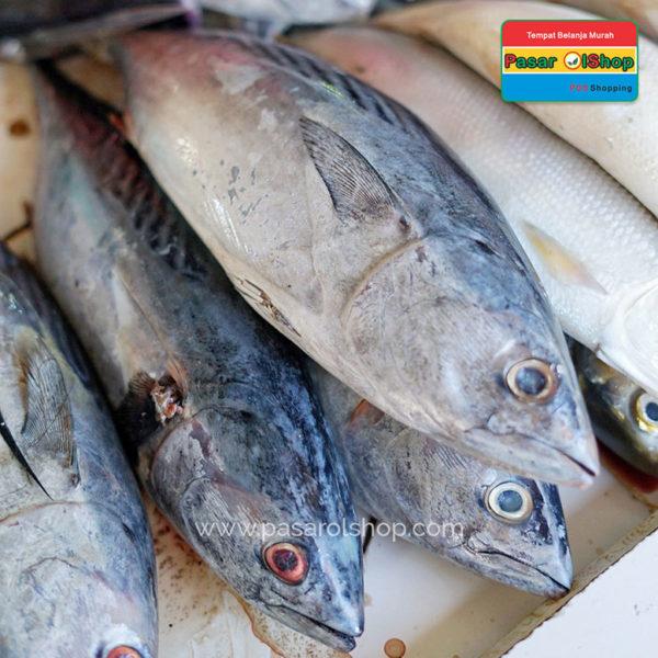 ikan tongkol segar agro buah pasarolshop 1- Pesan Di Antar   Buah Sayur Lauk Sembako