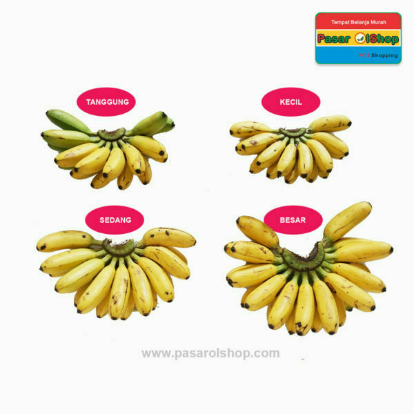 pisang mas kirana perbandingan ukuran agro buah pasarolshop 1- Pesan Di Antar | Buah Sayur Lauk Sembako