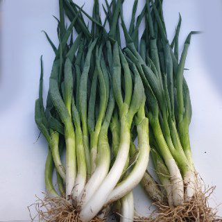 daun bawang eceran agro buah pasarolshop- Pesan Di Antar | Buah Sayur Lauk Sembako