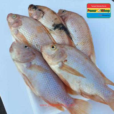 ikan nila agro buah pasarolshop- Pesan Di Antar | Buah Sayur Lauk Sembako