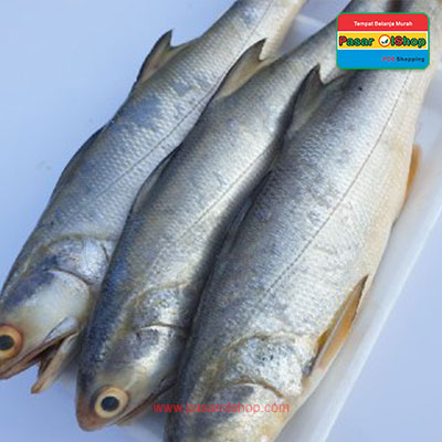 ikan senangin 1kg agro buah pasarolshop- Pesan Di Antar | Buah Sayur Lauk Sembako