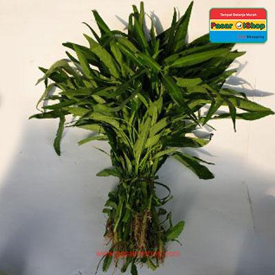 kangkung eceran agro buah pasarolshop- Pesan Di Antar | Buah Sayur Lauk Sembako