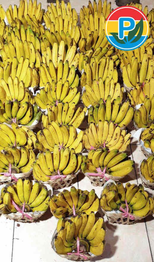 pisang ambon organik