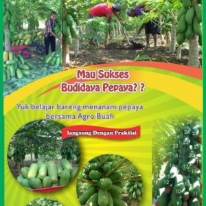 pelatihan berkebun- Pesan Di Antar | Buah Sayur Lauk Sembako